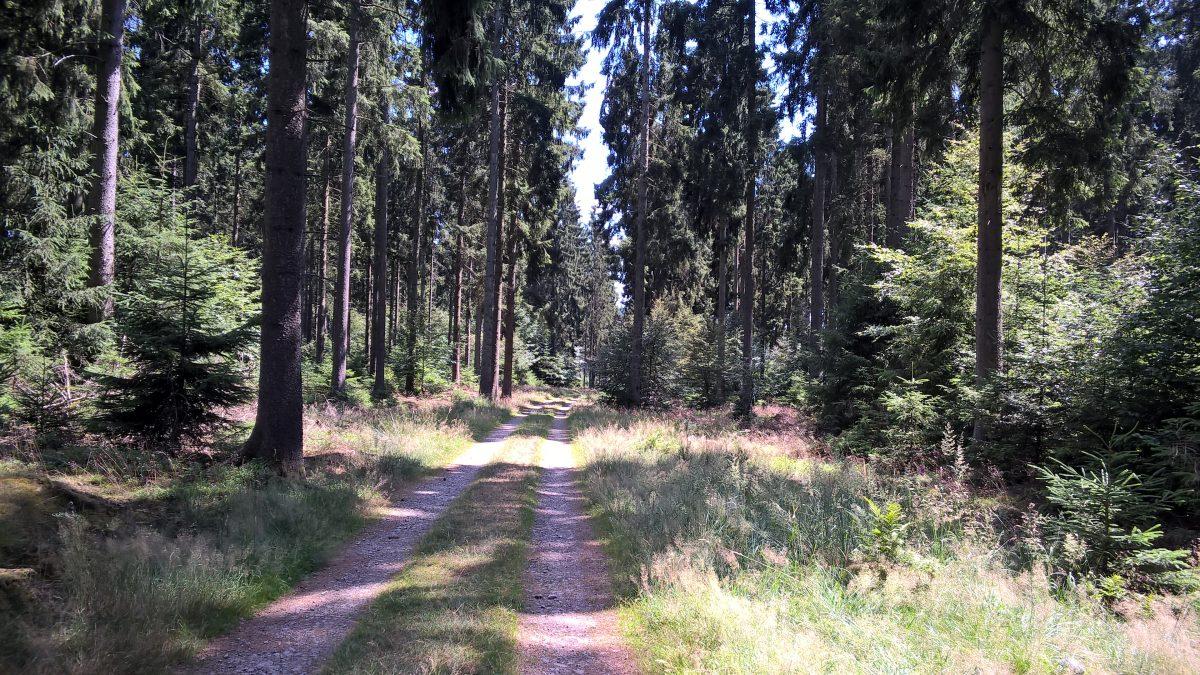 PromenadeHeinstert (3)