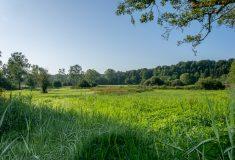 Marais de Grendel (4)