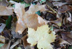 Feuilles d'automne 002