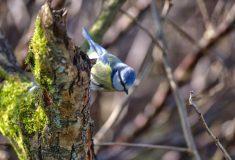 oiseau Photo Michel Maffioli 2